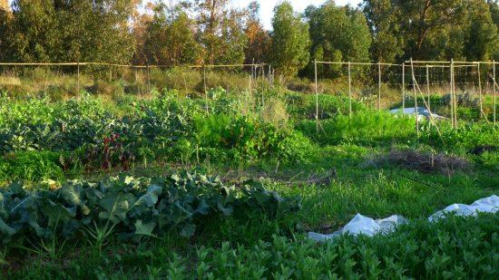 גן ירק