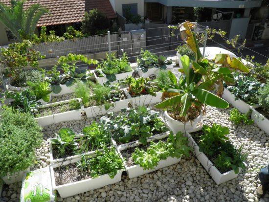 גינת ירק על גג חניה, המבוססת אדניות פלסטיק. צינורות הניקוז וההשקיה מוסתרים מתחת לחלוקי האבן