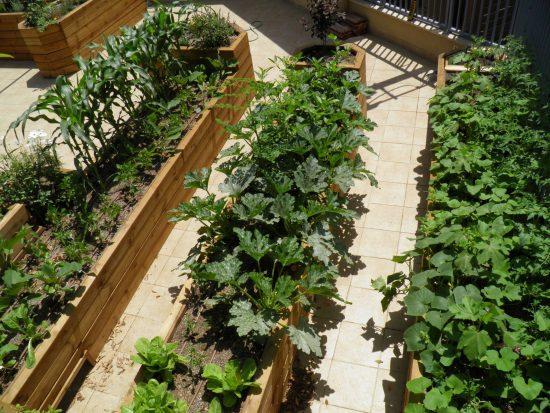 גינת ירק בקונסטרוקציית עץ אורן בהתאמה אישית (חודש לאחר שתילה)