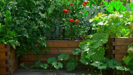 גינת ירק בתוך קונסטרוקציית עץ איפאה בהרכבה