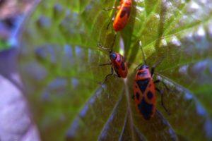 הגישה הטבעית לטיפול בגינת מאכל