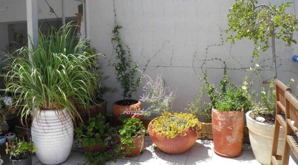 גג ירוק - גידול ירקות ותבלינים