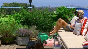 גג ירוק - גינת ירקות שופעת משגשגת על הגג בעיר