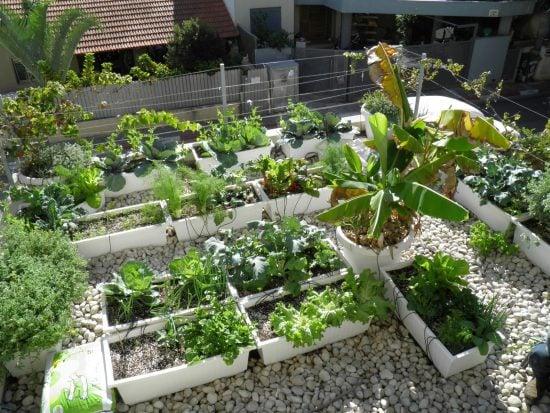 תבלינים ירקות צמחי פרי - הקמת גינת מאכל במרחב העירוני