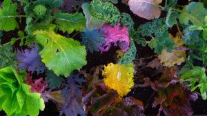 גינת מאכל אקולוגית בהתאמה אישית גינה מזינה