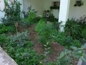 גינת חצר בבנין במרכז ת''א