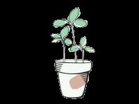 גינה ירקות אורגני
